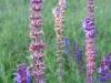 2008-07-12-dunafalva-038